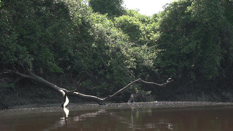 072 Pantanal , boating on the river , bird on tree Stock Video Footage