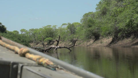 078 Pantanal , boating on the river , slowmotion Stock Video Footage