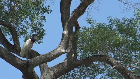 0111 Pantanal , boating on the river , big bird in Stock Video Footage
