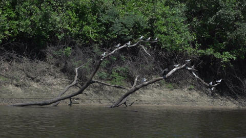 0113 Pantanal , boating on the river , birds on tr Stock Video Footage