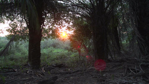 0138 Pantanal , group of tourists walking in wood Stock Video Footage