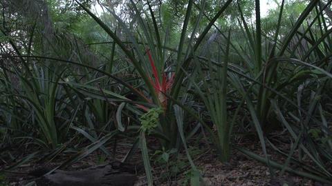0143 Pantanal , red plant in wetlands Footage