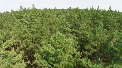 Flying Over The Pine Forest stock footage