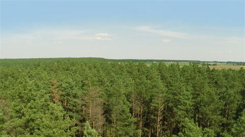 Flying over the pine forest Stock Video Footage