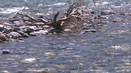 HD2008-6-9-16 mountain stream Stock Video Footage