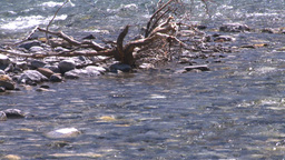HD2008-6-9-16 mountain stream Stock Video Footage