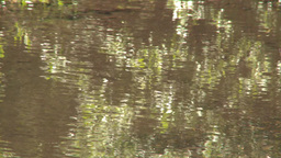 HD2008-6-9-32 tiny mountain stream reflections Stock Video Footage