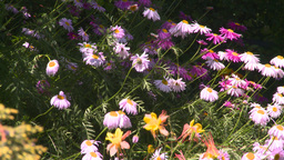 HD2008-6-9-42 flowers Stock Video Footage