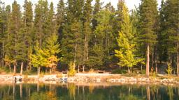 HD2008-10-1-2 lakeshore trees autumn Stock Video Footage