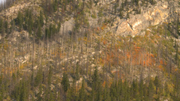 HD2008-10-1-10 lake boat ride autumn colors Footage