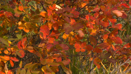 HD2008-10-1-65 shore autumn colors Stock Video Footage