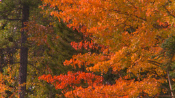 HD2008-10-1-79 shore autumn colors Stock Video Footage