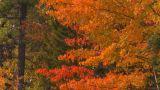HD2008-10-1-79 Shore Autumn Colors stock footage