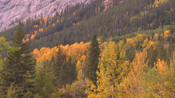 HD2008-10-1-81 mtn autumnforest Stock Video Footage