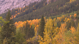 HD2008-10-1-81 mtn autumnforest Stock Video Footage