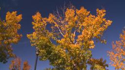 HD2008-10-1b-4 autumn trees Stock Video Footage