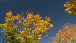 HD2008-10-1b-6 autumn trees Stock Video Footage