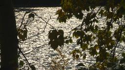 HD2008-10-1b-8 river silouhet trees Stock Video Footage