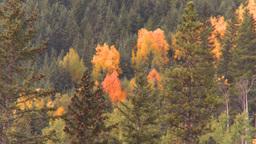 HD2008-10-2-3 autumn forest Banff Footage