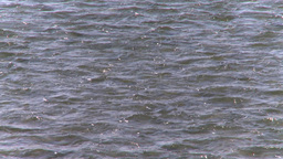 HD2008-10-2-53 bow river Stock Video Footage
