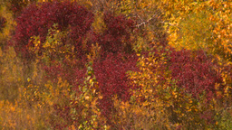HD2008-10-2-55 bow river autumn trees Z Stock Video Footage