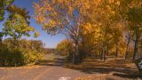 HD2008-10-2-59 Bicycle Path Roller Blades stock footage