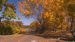 HD2008-10-2-59 bicycle path roller blades Stock Video Footage
