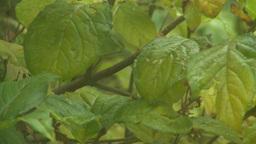 HD2008-10-4-3 rain on window rack focus Stock Video Footage