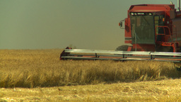 HD2008-9-2-5 combine harvest wheat field Stock Video Footage