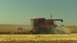 HD2008-9-2-7 combine harvest wheat field Stock Video Footage