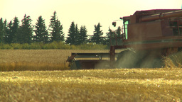 HD2008-9-2-11 combine harvest wheat field Footage