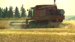 HD2008-9-2-11 combine harvest wheat field Stock Video Footage