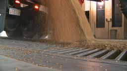HD2008-9-3-52 grain truck unloading Stock Video Footage