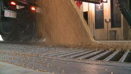 HD2008-9-3-52 grain truck unloading Footage