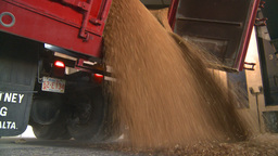 HD2008-9-3-52 grain truck unloading Stock Video Footage
