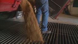 HD2008-9-3-54 grain truck unloading Stock Video Footage