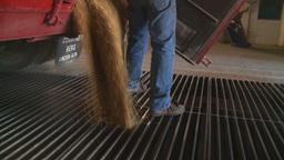 HD2008-9-3-54 grain truck unloading Footage