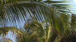 HD2009-4-6-13 Cuba beach palms Stock Video Footage