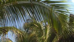 HD2009-4-6-13 Cuba beach palms Stock Video Footage
