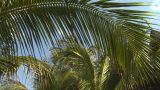 HD2009-4-6-13 Cuba Beach Palms stock footage