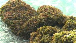 HD2009-4-6-67 Cuba beach water on rocks moss Stock Video Footage