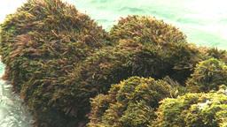 HD2009-4-6-67 Cuba beach water on rocks moss Footage