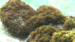 HD2009-4-6-67 Cuba beach water on rocks moss Stock Video Footage