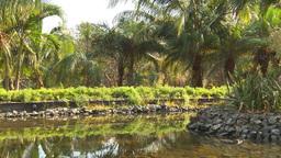 HD2009-4-7-2 Cuba lagoon and jungle Stock Video Footage
