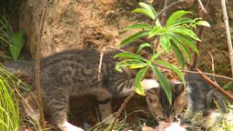 HD2009-4-7-12 Cuba kittens Footage