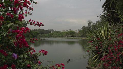 022 Sao Paulo , Ibirapuera park , pond , flowers , Footage