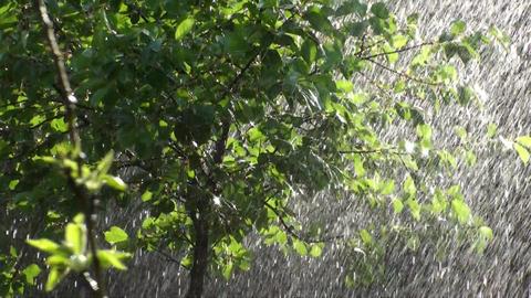 Summer Rainfall HD Footage