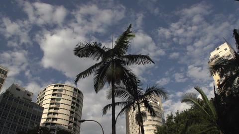 084 Sao Paulo , palmtrees , buildings , helicopter Footage