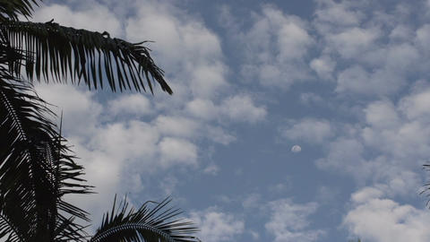 085 Sao Paulo , palmtrees , cloudy sky with moon Footage