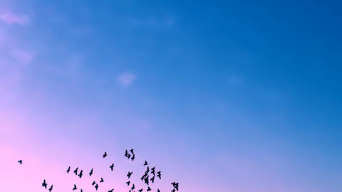 FLYING FLOCK OF BIRDS IN THE MAGICAL SKY FULL HD Stock Video Footage